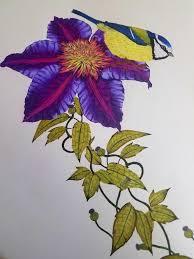 Amazon Birdtopia Coloring Book 9781780677552 Daisy Fletcher Books