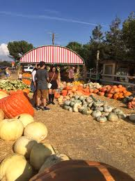 Underwood Farms Pumpkin Patch Hours by Pumpkin Pickin U0027 U2014 Shannon Did What