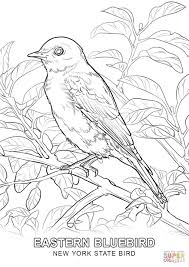 New York State Bird Coloring Page And Pages