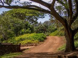 McBryde Garden Kauai cherylmarland