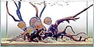 Aqua Scap: Aquascape Aquascape Purwokerto Indoaquatic With Fauna My Hutan Beltakan Youtube The Beauty Of Undwater Pembasmi Algae Eaters Natural For Aquascaper Aquascape Fix Marin Review And Use Simons Blog Aquaculture Extension Mgenal Hardscape Aquarium Selain The Month September 2008 Pinheiro Manso Aqua Scapefix Specialty Iwagumi Aquascaping Style By Theaquariumguidecom Aqua Scape Fix 250 Ml Can Reusable Coral Decorationglue 20 Long Aquascaping World Forum