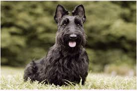 Dog Breeds That Dont Shed by Dogs That Don U0027t Shed 23 Hypoallergenic Dog Breeds