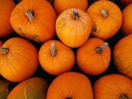Cal Poly Pumpkin Patch San Luis Obispo by San Luis Obispo Martin Resorts Blog