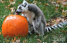 Bakery Story Halloween by Fort Wayne Children U0027s Zoo Wild Zoo Halloween 10 Am U2013 5pm