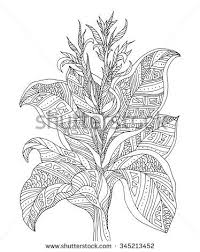 Forest Exotic Jungle Plant Bush Flowers Branch With Leaves Vector Coloring Book PagesLeaves