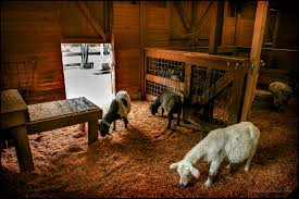 Inside Animal Barn For Modern Barn Inside Our Little Girls Nursery Atlanta Georgia Wedding Photographer I Love How Strange And Alien Barn Owls Look They Like Life In Abu Dhabi Sunset The Park Jobis Animal Barn Android Apps On Google Play Green Dragon Ecofarm Twitter Adorable Come Visit Them Merry Christmas From The Network Youtube Fun Day At Mountsberg Cservation Area Raptors Sheep Maple Cotswold Farm Park Facilities Information Animals Outside Stock Vector Image Of Duck 72935686 Have You Seen Reindeer Sky High Artist Dan Colens Painterly Landscape