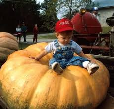 Pumpkin Festival Cleveland Ohio by Best 25 Pumpkin Festival Ohio Ideas On Pinterest Circleville