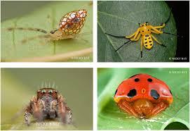 une araignée sur sa toile kidi science