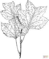 Click The Tulip Tree Leaves Coloring Pages