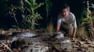riesenschlangen 1 2 by reptiliendokus