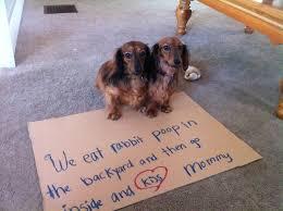 Dog Shaming -