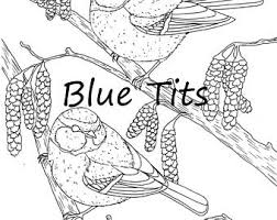 Bird Downloadable Colouring Page Blue Tits British Birds Wildlife All Ages