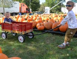 Powell River Pumpkin Patch by Latest Headlines Zip06 Com