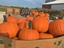 Redlands Fl Pumpkin Patch by Wholesale Pumpkins Polter U0027s Berry Farm