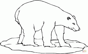 Great Polar Bear Coloring Pages About Remodel Line Drawings Of Bears Animal