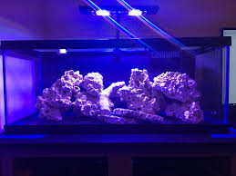 Aquascape Idea For Nano 20long (new Tank) - Aquascaping Forum ... Home Accsories Astonishing Aquascape Designs With Aquarium Minimalist Aquascaping Archive Page 4 Reef Central Online Aquatic Eden Blog Any Aquascape Ideas For My New 55g 2reef Saltwater And A Moss Experiment Design Timelapse Youtube Gallery Tropical Fish And Appartment Marine Ideas Luxury 31 Upgraded 10g To A 20g Last Night Aquariums Best 25 On Pinterest Cuisine Top About Gallon Tank On Goldfish 160 Best Fish Tank Images Tanks Fishing