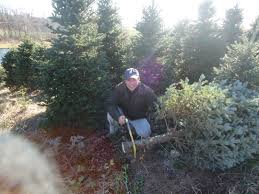 Griswold Christmas Tree Farm by In Search Of The Perfect Christmas Tree