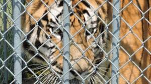 Petition · LDWF: Enforce Louisiana State Law & Ensure Tony The Tiger ...