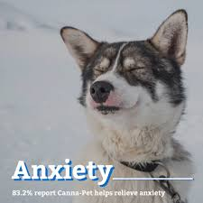 Canna Pet Coupon Code Best Cbd Oil For Dogs In 2019 Reviews Of The Top Brands And Grateful Dog Treats Canna Pet King Kanine Coupon Code Review Pets Codes Promo Deals On Offerslovecom Hemppetproducts Instagram Photos Videos Cbd Voor Die Diy Book Marketing Buy Cannabis Products Online Mail Order Dispensarygta April 2018 Package Cannapet Advanced Maxcbd 30 Capsules 10ml Liquid V Dog Coupon Finder Beginners Guide To Health Benefits Couponcausecom Purchase Today Your Chance Win A Free Cbdcannabis Hashtag Twitter