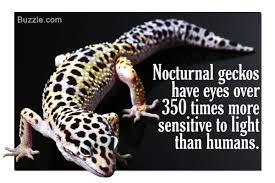 Crested Gecko Shedding Info by 100 Crested Gecko Shedding Behavior Mack Snow Leopard Gecko
