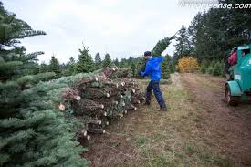 Xmas Tree Farms Albany Ny by It U0027s Momsense Using Our Super Mom Powers To Call Shenanigans On