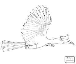 Coloring Pages Birds Rhinoceros Hornbill Flying