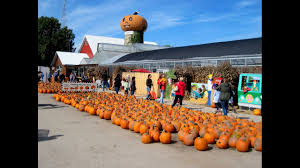 Bengtson Pumpkin Farm Chicago by Corn Mazes And Pumpkin Patches Near Chicago 2017 Axs