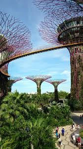 Gardens by the Bay Super trees Grove & Skyway Singapore