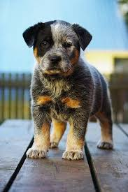 best 25 medium dog breeds ideas on pinterest medium sized dogs