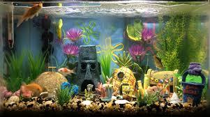 Spongebob Aquarium Decor Set by Bottom Freshwater Aquarium Build Album On Imgur