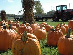 Bengtsons Pumpkin Patch Homer Glen Il by Celebrate The Season At An Area Pumpkin Farm Mokena Il Patch