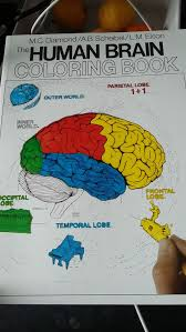 The Human Brain Coloring Book Concepts Series Amazon