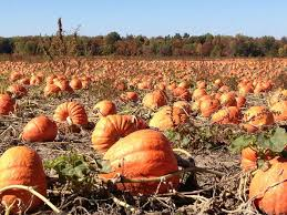North Lawrence Pumpkin Patch by Pumpkin Patches Farm Activities Corn Mazes And More Columbus