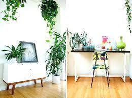 plante dans chambre à coucher plante chambre dans feng shui amanda ricciardi