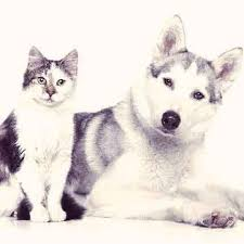 clindamycin for cats clindamycin treating bacterial infections in dogs and cats