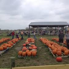 Atlanta Pumpkin Patch Corn Maze by Shuck U0027s Corn Maze U0026 Pumpkin Patch Pumpkin Patches Pleasant