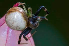 Spirit Halloween Jumping Spider by Jumping Spider Philip U0027s Blog