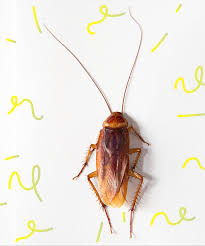 Bronx Zoo Halloween 2017 by Name A Cockroach Bronx Zoo Valentines Day Gift