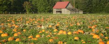 Hunter Farms Pumpkin Patch Olympia Wa by Thrifty Thurston Picks The Perfect Pumpkin At Thurston County