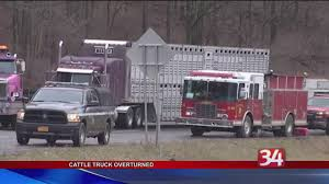 100 Cattle Truck Truck Overturns On I81 Ramp