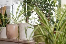 dpa tmn berlin zimmerpflanzen sorgen für akzente im