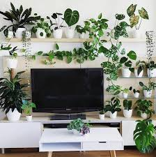 loving this home decor inspo by plantsomeplants who needs