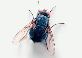 How To Control Flies In Your Home And Yard 7 Tips For Fabulous Backyard Parties Party Time And 100 Flies In Get Rid Of Best 25 How To Control In Your Home Yard Yellow Fly Identify Of Plants That Repel Flies Ideas On Pinterest Bug Ants Mice Spiders Longlegged Beyond Deer Fly Control Pest Chemicals 8008777290 A Us Flag Flew Iraq Now The Backyard Jim Jar O Backyard Chickens To Kill Mosquitoes Mosquito Treatment Picture On And Fascating