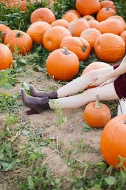 Pumpkin Picking Maine by 102 Best Autumn Images On Pinterest Fall Autumn Fall And