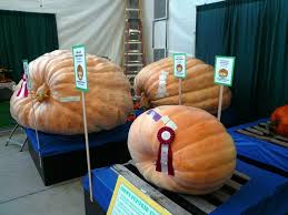 Puyallup Pumpkin Patch by Washington State Fair Photo Gallery
