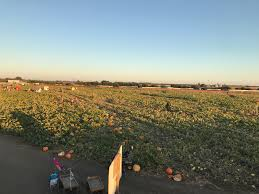 Bishop Pumpkin Farm In Wheatland by These 7 Norcal Pumpkin Patches Will Make You Enjoy Fall