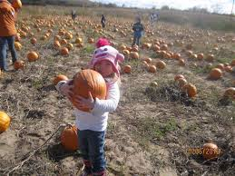 Pumpkin Patch Green Bay Wi by Pumpkins And Hayrides And Berryland In Abrams Wisconsin