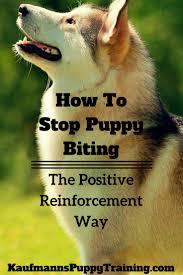 Do Bullmastiffs Shed A Lot by 1355 Best Pets Dog Stuff Images On Pinterest Dog Dog Stuff