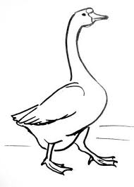 Full Size Of Coloring Pagefascinating How To Draw A Geese Step By Goose Drawing Large