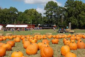 Free Pumpkin Patch In Katy Tx by 12 Pumpkin Patches To Consider Across The State